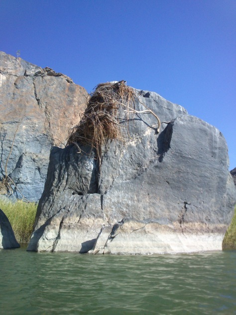 This is a closer picture of the rock with branch debris on it, from the last flooding of the Orange River