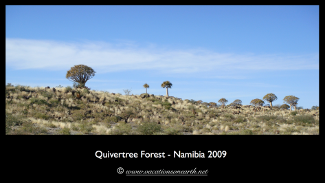 Namibia 2009 - Quivertree Forest .006
