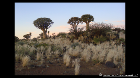 Namibia 2009 - Quivertree Forest .017
