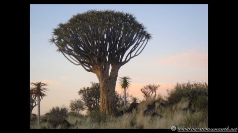 Namibia 2009 - Quivertree Forest .018