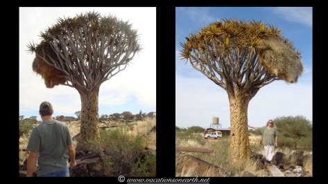 Namibia 2009 - Quivertree Forest .026