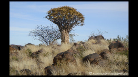 Namibia 2009 - Quivertree Forest .027
