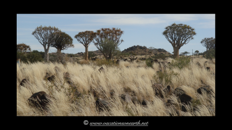 Namibia 2009 - Quivertree Forest .028