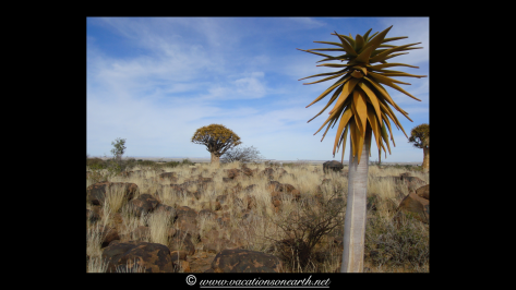 Namibia 2009 - Quivertree Forest .030