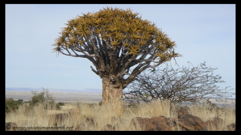 Namibia 2009 - Quivertree Forest .031