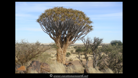 Namibia 2009 - Quivertree Forest .032