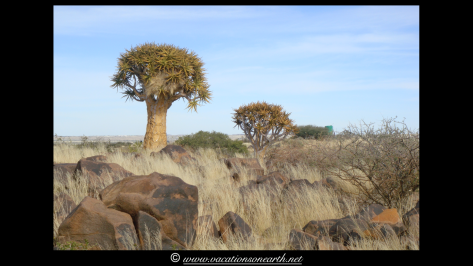 Namibia 2009 - Quivertree Forest .033