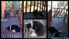 Namibia 2011 - The resort dogs relaxing at our Amanzi Trails Chalet - July