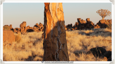 "The incredible ""trunk"" of the Quivertree at Giants Playground - Namibia 2013 (August)"