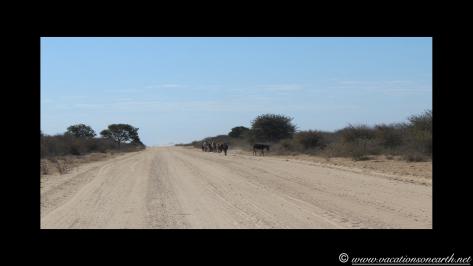 Namibia 2013 - Harnas to Tsumkwe road trip.001