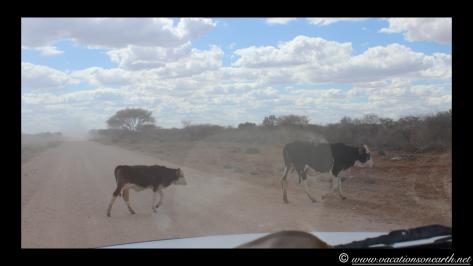 Namibia 2013 - Harnas to Tsumkwe road trip.012