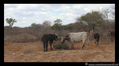 Namibia 2013 - Harnas to Tsumkwe road trip.013