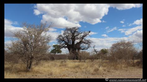 Namibia 2013 - Harnas to Tsumkwe road trip.020