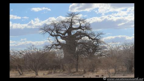 Namibia 2013 - Harnas to Tsumkwe road trip.025