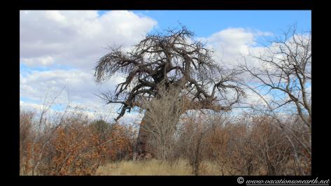 Namibia 2013 - Harnas to Tsumkwe road trip.026