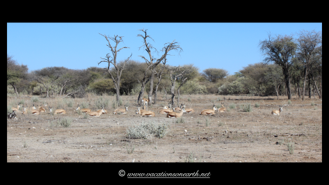 Namibia 2013 - Harnas Wildlife Foundation .030