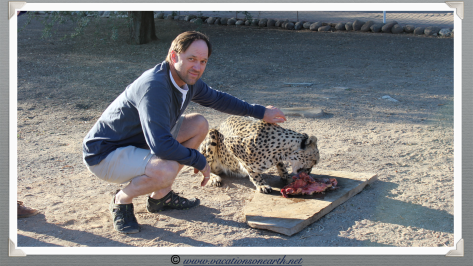 Namibia 2013 - Ian stroking a cheetah at Quivertree Forest Rest Camp (August)