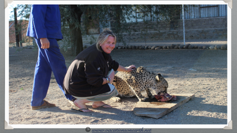 Namibia 2013 - Wendy stroking a cheetah at Quivertree Forest Rest Camp (August)