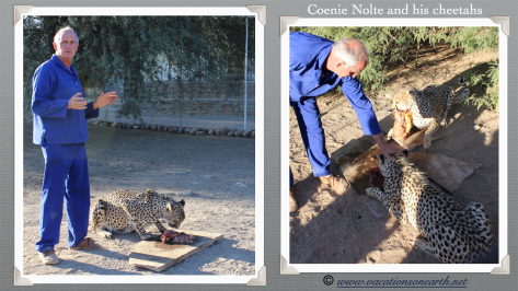 Namibia 2013 - Coenie Nolte with his cheetahs at Quivertree Forest Rest Camp (August)