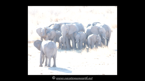 Namibia 2013 - Khaudum National Park.019