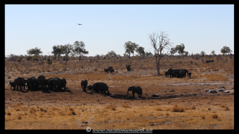 Namibia 2013 - Khaudum National Park 2.002