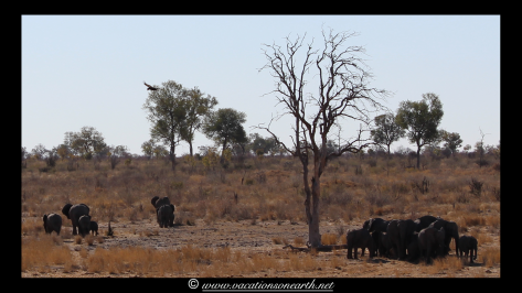 Namibia 2013 - Khaudum National Park 2.003