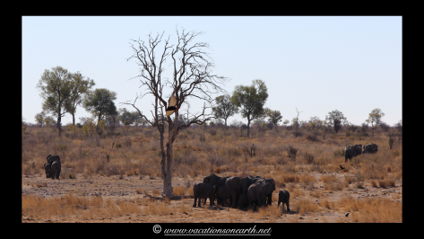 Namibia 2013 - Khaudum National Park 2.004