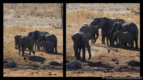 Namibia 2013 - Khaudum National Park 2.005
