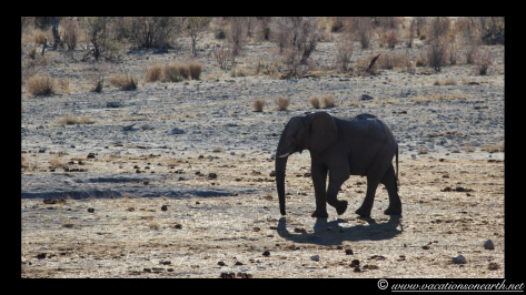 Namibia 2013 - Khaudum National Park 2.006