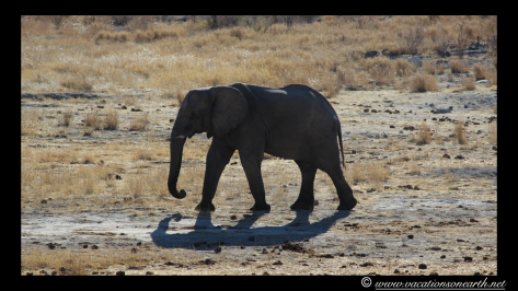 Namibia 2013 - Khaudum National Park 2.008
