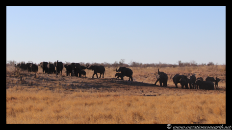 Namibia 2013 - Khaudum National Park 2.011