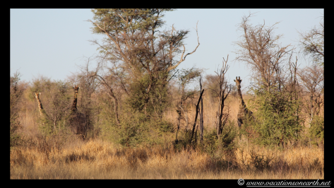 Namibia 2013 - Khaudum National Park 2.012