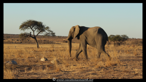 Namibia 2013 - Khaudum National Park 2.015