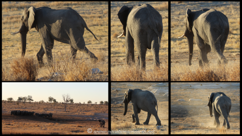 Namibia 2013 - Khaudum National Park 2.017