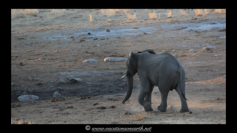 Namibia 2013 - Khaudum National Park 2.018