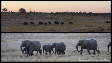 Namibia 2013 - Khaudum National Park 2.020