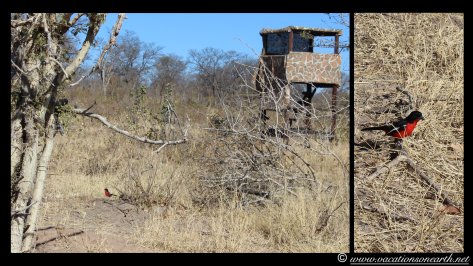 Namibia 2013 - Khaudum National Park 2.031