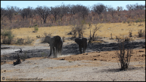 Namibia 2013 - Khaudum National Park 2.032