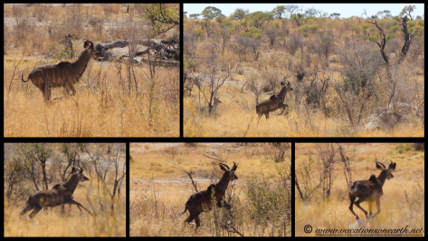 Namibia 2013 - Khaudum National Park 2.036