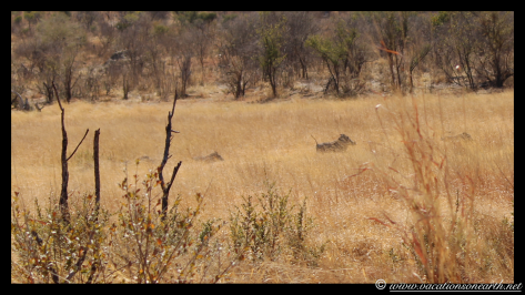 Namibia 2013 - Khaudum National Park 2.037