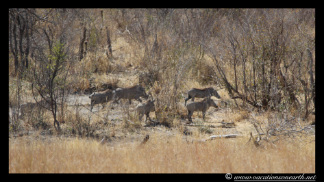 Namibia 2013 - Khaudum National Park 2.038
