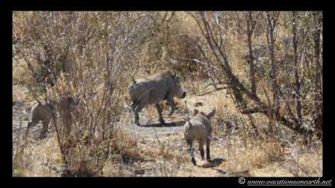 Namibia 2013 - Khaudum National Park 2.039