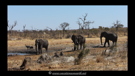 Namibia 2013 - Khaudum National Park 2.040