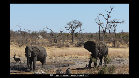 Namibia 2013 - Khaudum National Park 2.041