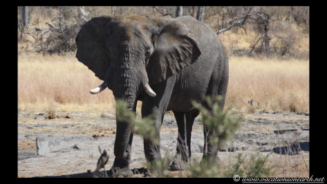 Namibia 2013 - Khaudum National Park 2.042