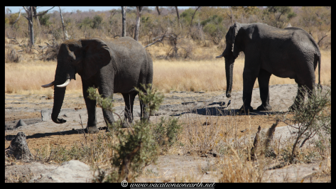 Namibia 2013 - Khaudum National Park 2.043
