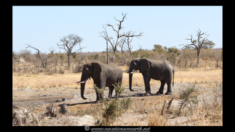 Namibia 2013 - Khaudum National Park 2.044