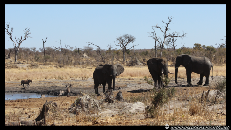 Namibia 2013 - Khaudum National Park 2.045