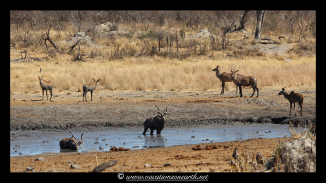 Namibia 2013 - Khaudum National Park 2.047