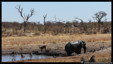 Namibia 2013 - Khaudum National Park 2.048